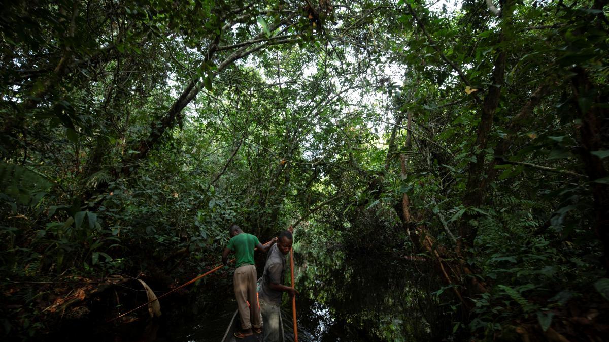 Dans la forêt de Mbandaka en République démocratique du Congo, le 2 avril 2019.